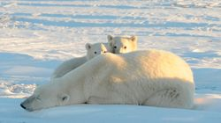 The Arctic Just Experienced Its Warmest Month In History, By