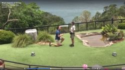 A Guy Proposed During The Bird Show At Taronga Zoo And It Was