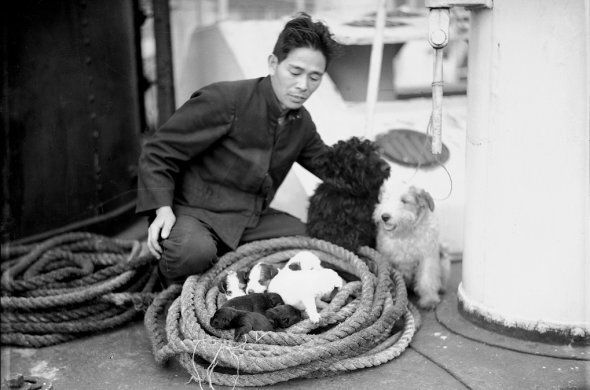 A seaman on boat Yahiko Maru watches a litter of puppies coiled in a rope.