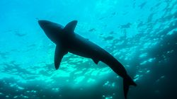 Man Attacked By Shark On NSW Mid-North