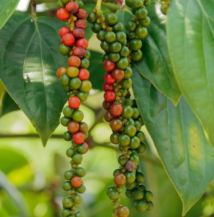 Peppercorns come in a variety of colours.