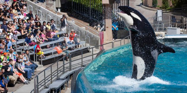Sea World San Diego's orca shows were world