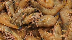 Green Prawn Imports Suspended Amid Outbreak Of White Spot