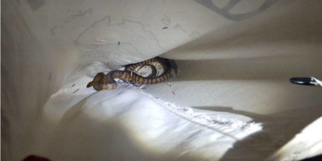 Three snakes have been found in a parcel at a NSW post