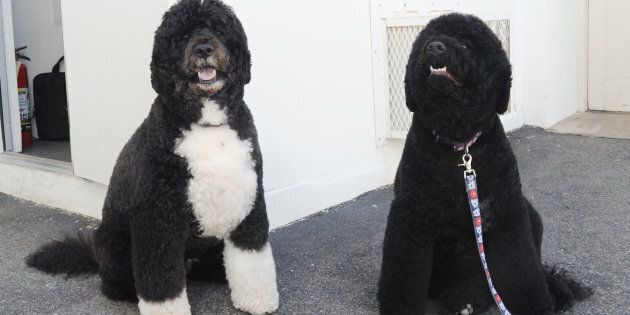 First dogs Bo, left, and Sunny Obama are also moving out of the White House this month.