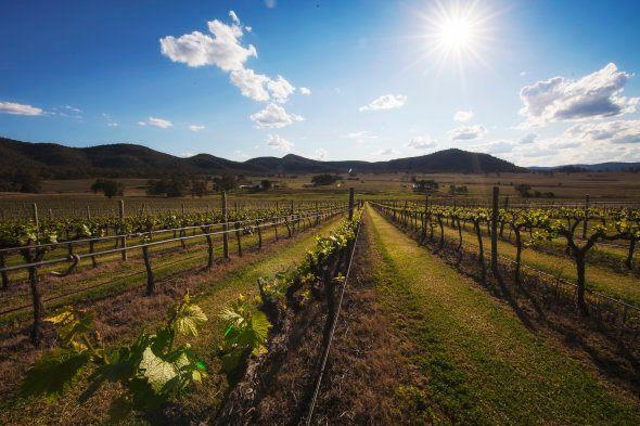 James Estate Winery in the Upper Hunter region of Baerami, New South