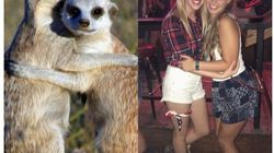 Are Meerkats The Sorority Sisters Of The Animal