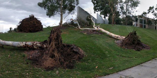 The Parliament House lawns had a tumultuous time on Friday