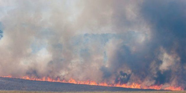 Bushfires have swept through thousands of hectares near