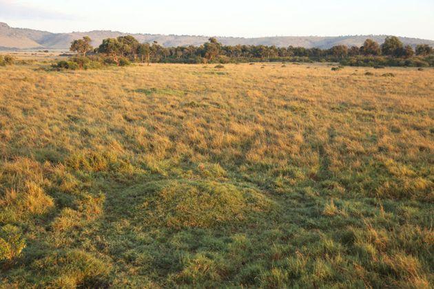 Termite mounds create small humps in Kenya's Masai Mara