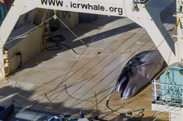 Turnbull And Abe Forgot To Discuss The Whale In The