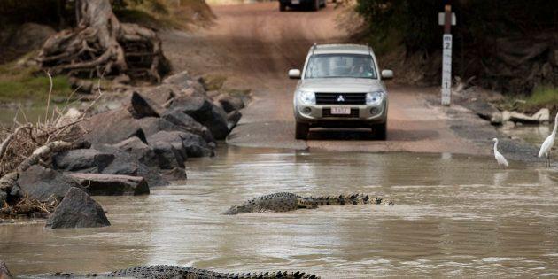 Crocodiles often lurk at Cahill's