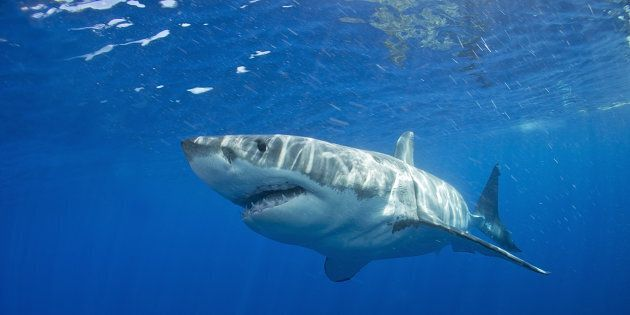 Images have been captured of a young surfer's encounter with a great white