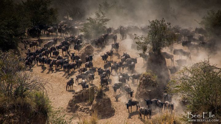 The Wildebeest Migration, declared one of the greatest wildlife shows on the planet, is under threat.