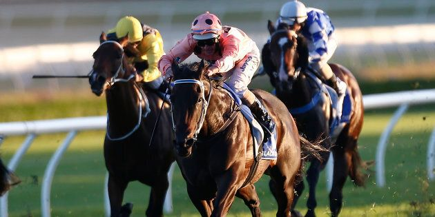 Any excuse to put in a picture of Black Caviar. This was her last career run and win, at Randwick in 2013.