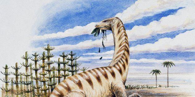 UNSPECIFIED - FEBRUARY 17: Lufengosaurus huenei, Massospondylidae, Early Jurassic. Illustration. (Photo by DeAgostini/Getty Images)