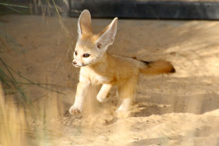 We're pretty sure this is a foxtrot.