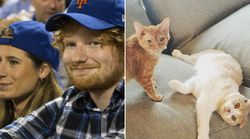 Ed Sheeran And His 'High School Sweetheart' Are Cat People,