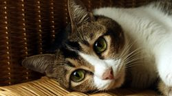 Long-Forgotten Virus Outbreak Kills More Than 50 Cats In