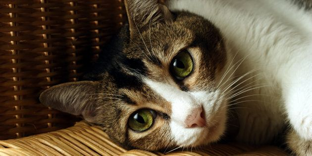 Cats are being infected with a long-forgotten