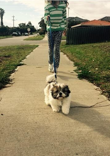Switching off can mean simple things such as taking your four-legged friend for a walk and being mindful...