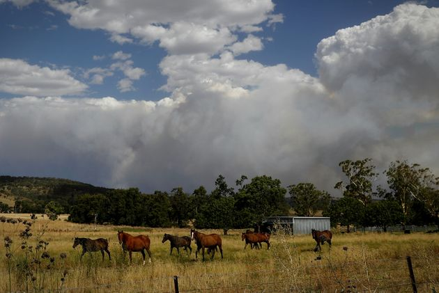 Smoke from the Sir Ivan fire east of Dunedoo, NSW, seen from Coolah, on Sunday. Photo: Alex