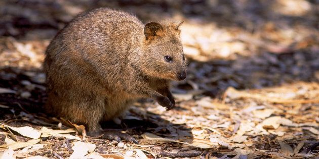 Two men have been charged over a quokka kicking incident that occurred on Rottnest Island.