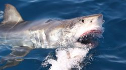 Man Fighting For Life After Being Mauled By Shark In