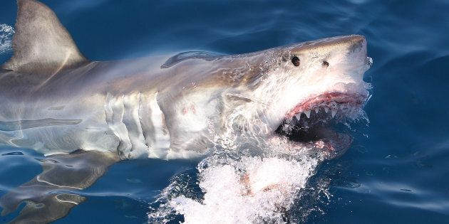 A man has been attacked by a shark in north