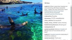 Synchronised Swimming Sea Lions Show Off At Stunning Rottnest