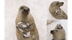 These Seals Hugging Toy Versions Of Themselves Are The Meaning Of