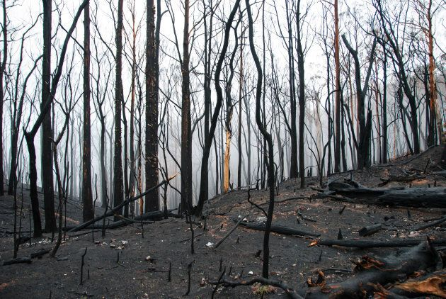 A severe fire tore though Western Australia's southern forests in 2015.