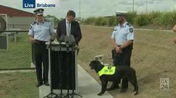 Australia Is Giving An Award To A Very Good Dog Today For