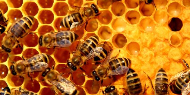 Bees working on making honey