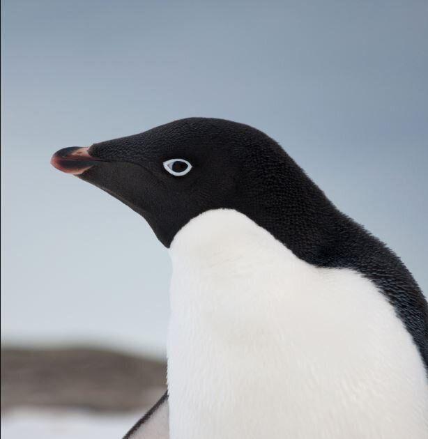 You squawkin' to me?