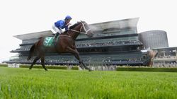 'Amazing' Winx Makes It 16 Wins In A Row On Golden Slipper