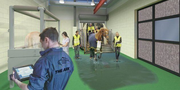 At The Ark, horses canget groomed and enjoy a meal of hay before their next flight.