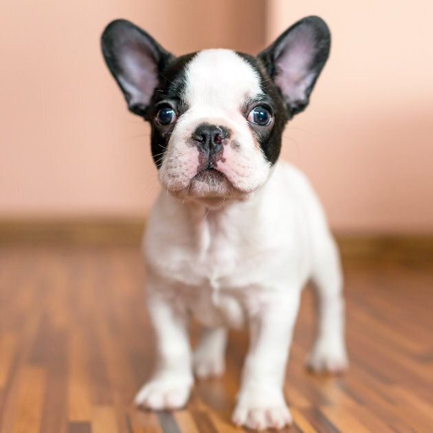 An example of a cute puppy