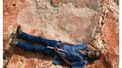 The Largest Dinosaur Footprints In The World Have Been