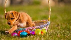 Australia's Largest Easter Egg Hunt FOR DOGS Is