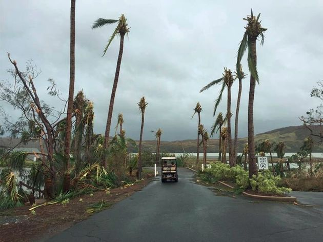 Palm trees stripped of their branches on Hamilton
