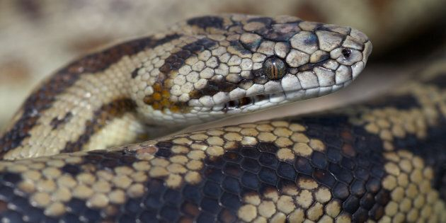 Snakes have been spotted in all spots after coming from Queensland floodwaters.