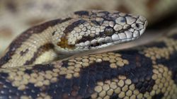 Queensland Residents Shocked By Snakes Emerging From
