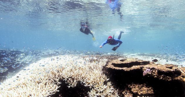 Climate Council: The devastating 2016 GBR bleaching was at least 175 times more likely due to climate
