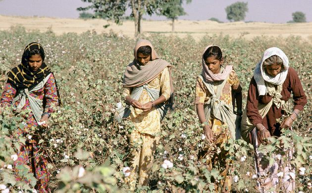 Only 7 percent of brands know where thier cotton comes