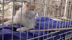 This Charity Cares For Animals Rescued From The Syrian Civil