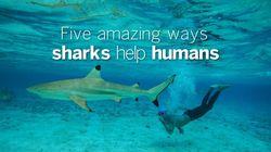 5 Amazing Ways Sharks Help