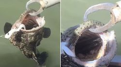 Aussie Catches A Fish That Caught A Snake -- Oh
