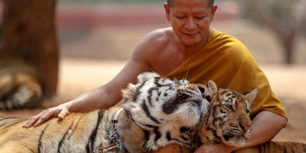 All tigers have now been removed from the controversial 'temple' in