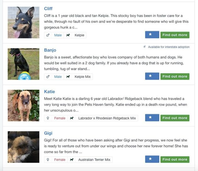 Pet profiles online allow potential owners to find a pet much more easily than racing around in a car...